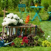 Alter Leiterwagen mit Blumen im Garten